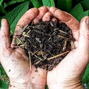 Understanding soil